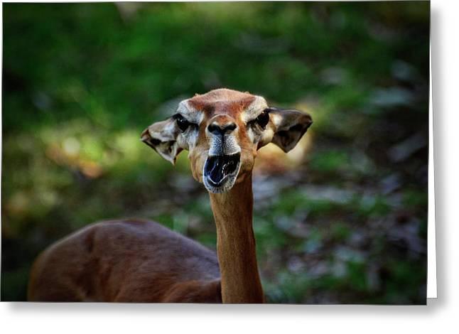 Gazelle Greeting Cards - Attitude  Greeting Card by Saija  Lehtonen