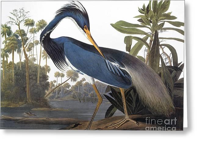 Audubon Greeting Cards - Audubon: Heron, 1827 Greeting Card by Granger