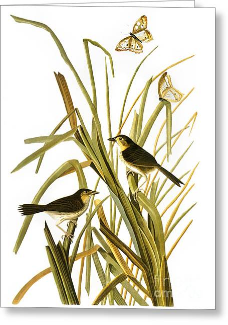 Sparrow Greeting Cards - Audubon: Sparrow, (1827) Greeting Card by Granger