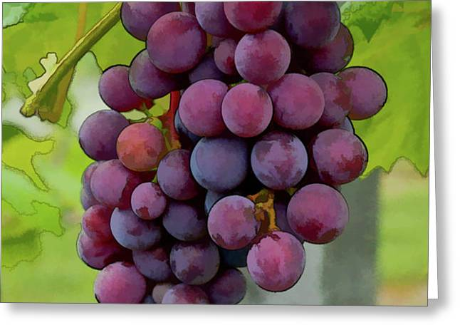 August Grapes Greeting Card by Michael Flood