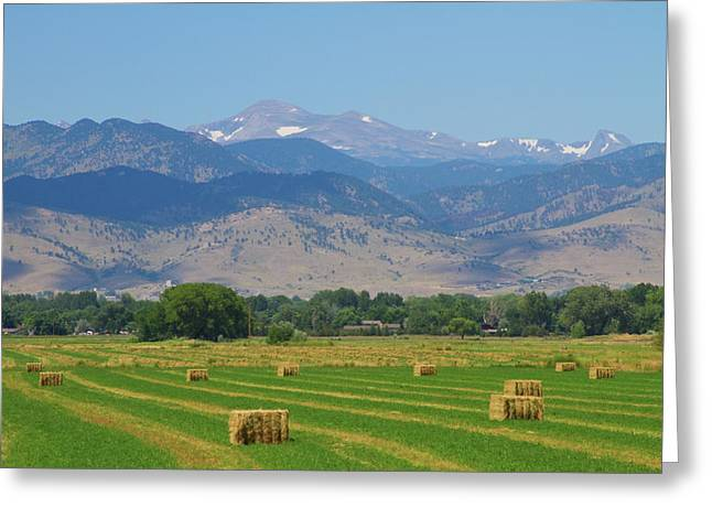 Hay Bales Greeting Cards - August Hay Boulder County Colorado Greeting Card by James BO  Insogna
