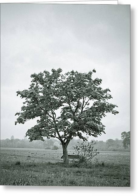 Miserable Greeting Cards - August in England Greeting Card by Andy Smy