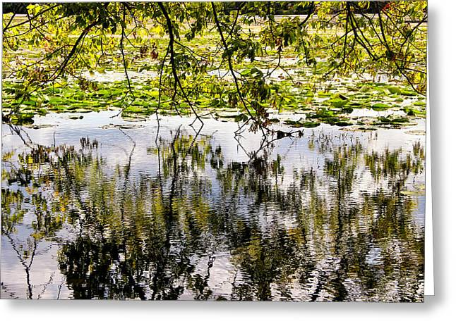 Reflections Of Trees In River Greeting Cards - August Reflections Greeting Card by Rachel Cohen