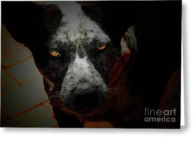 Dog Portraits Digital Art Greeting Cards - Australian Cattle Dog Greeting Card by Steven  Digman