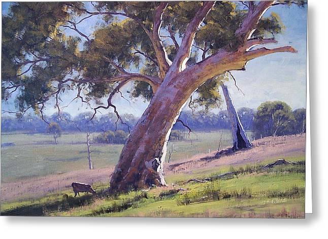 Gum-tree Greeting Cards - Australian Eucalyptus tree Greeting Card by Graham Gercken