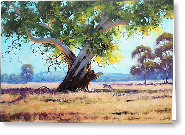 Eucalyptus Tree Greeting Cards - Australian Red Gum Greeting Card by Graham Gercken