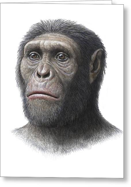 Missing Greeting Cards - Australopithecus Sediba Head Greeting Card by Mauricio Anton
