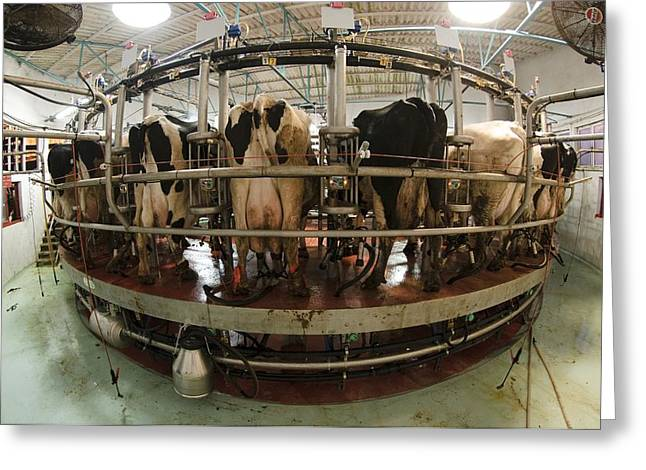 Cattle-shed Greeting Cards - Automatic Milking Machine Greeting Card by Photostock-israel