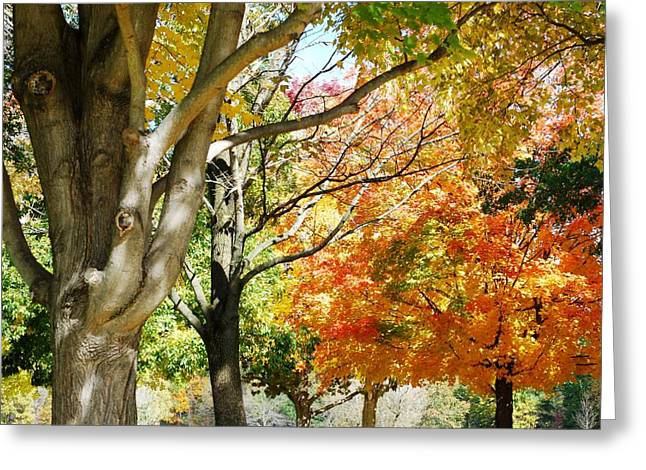 Autum Greeting Cards - Autum Canopy Greeting Card by Peter  McIntosh