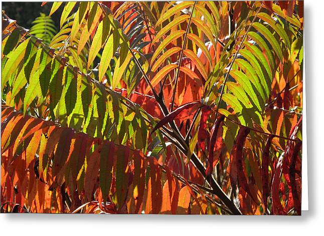 Autum Abstract Greeting Cards - Autum Sumach  3  Greeting Card by Lyle Crump