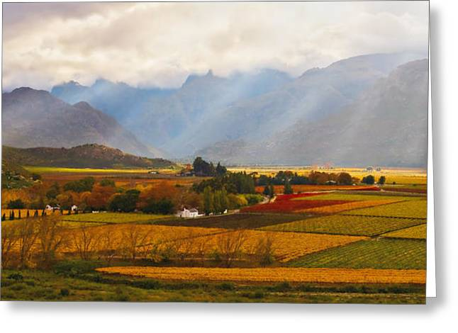 Vineyard Prints Greeting Cards - Autumn - Hex-river Valley Greeting Card by Basie Van Zyl
