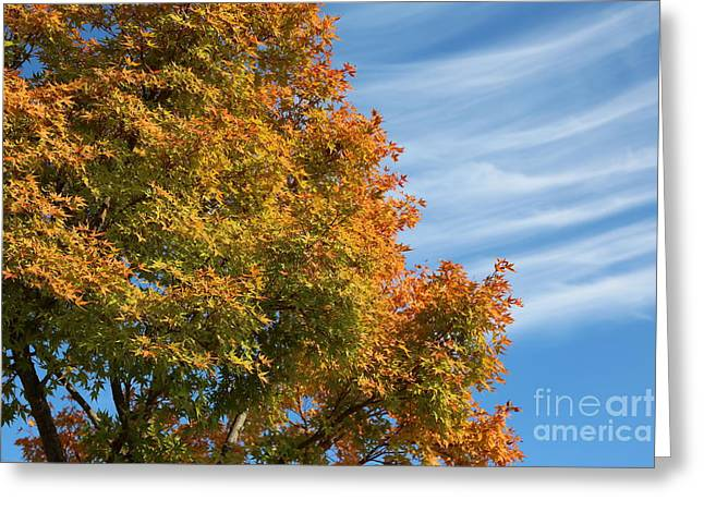 Autumn Anticipation Greeting Card by Carol Groenen