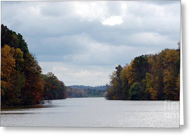 Fall Colors Greeting Cards - Autumn at Barkcamp State Park Greeting Card by Susan Stevens Crosby