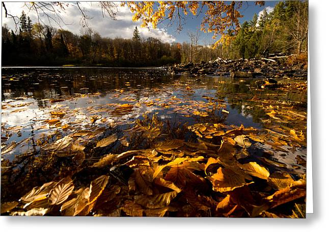 Algonquin Greeting Cards - Autumn at Ragged Falls Greeting Card by Cale Best