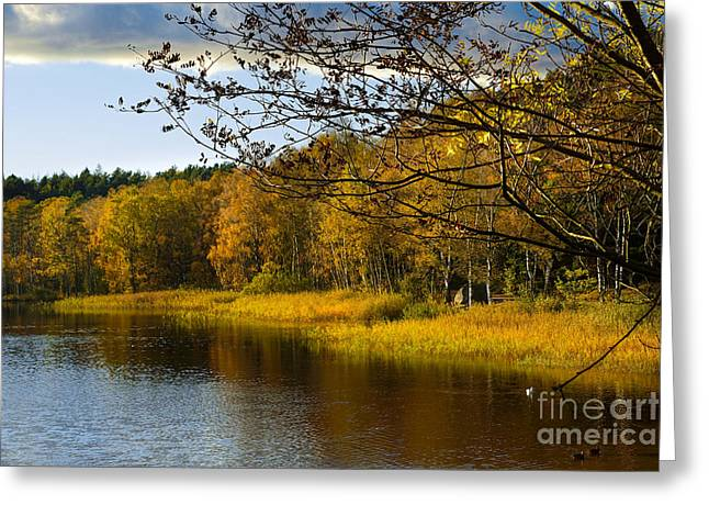 Autumn Art Greeting Cards - Autumn at the pond Greeting Card by Lutz Baar
