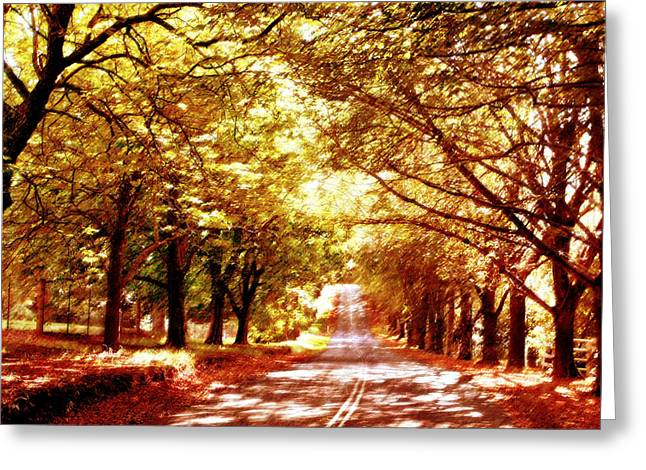 Dappled Light Greeting Cards - Autumn Avenue Greeting Card by Linde Townsend