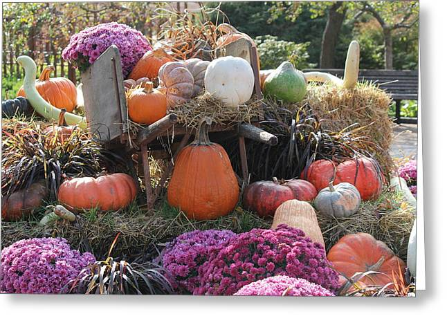 Becky Lodes Greeting Cards - Autumn Greeting Card by Becky Lodes