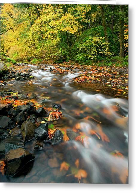 Fall Creek Greeting Cards - Autumn Beneath Greeting Card by Mike  Dawson