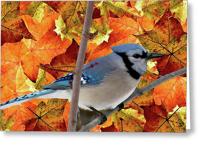 Autumn Leaf On Water Mixed Media Greeting Cards - Autumn Blue Jay Greeting Card by Debra     Vatalaro