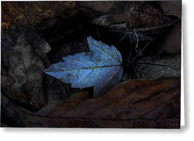 Forest Floor Greeting Cards - Autumn Blue Greeting Card by Ron Jones
