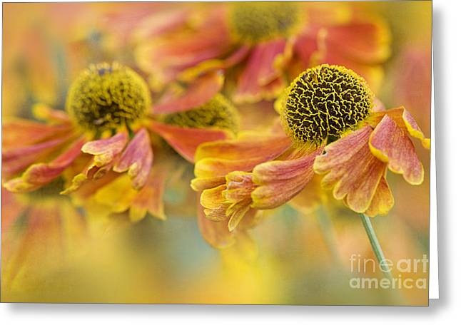 Sneezeweed Greeting Cards - Autumn Breeze Greeting Card by Jacky Parker
