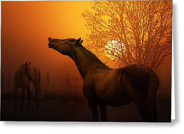 autumn breeze Greeting Card by Joachim G Pinkawa