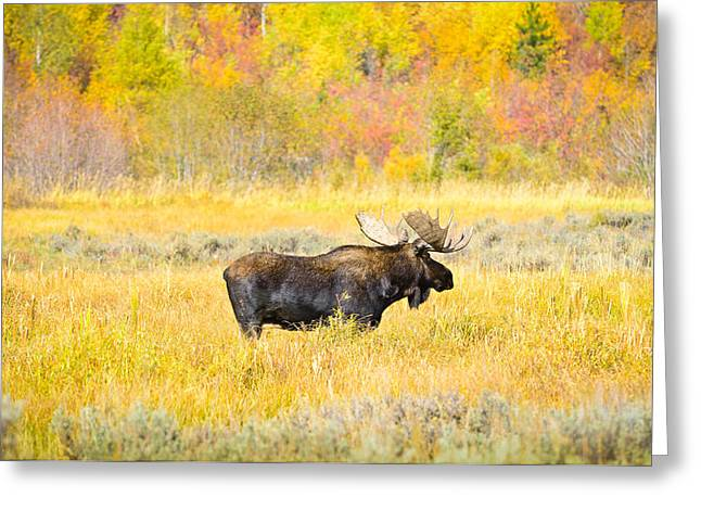 Photographic Art Greeting Cards - Autumn Bull Limited Edition Greeting Card by Greg Norrell