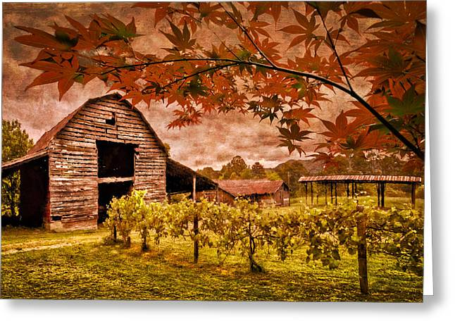 Blue Grapes Greeting Cards - Autumn Cabernet Greeting Card by Debra and Dave Vanderlaan