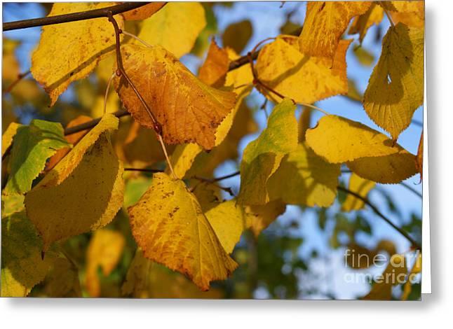 Autumn Art Greeting Cards - Autumn Greeting Card by Carol Lynch