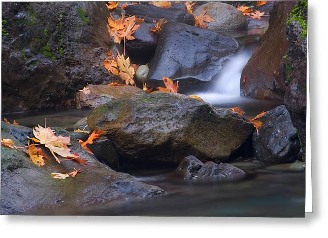 Moss Greeting Cards - Autumn Cascades Greeting Card by Mike  Dawson