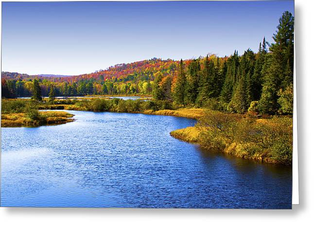 Fir Trees Greeting Cards - Adirondack Lake Near Old Forge Greeting Card by David Patterson