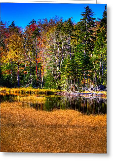 Fir Trees Greeting Cards - Adirondack Color 52 Greeting Card by David Patterson