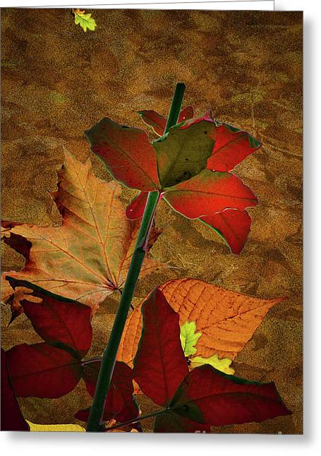 Autumn Sheets Greeting Cards - Autumn Color Greeting Card by Bruno Santoro