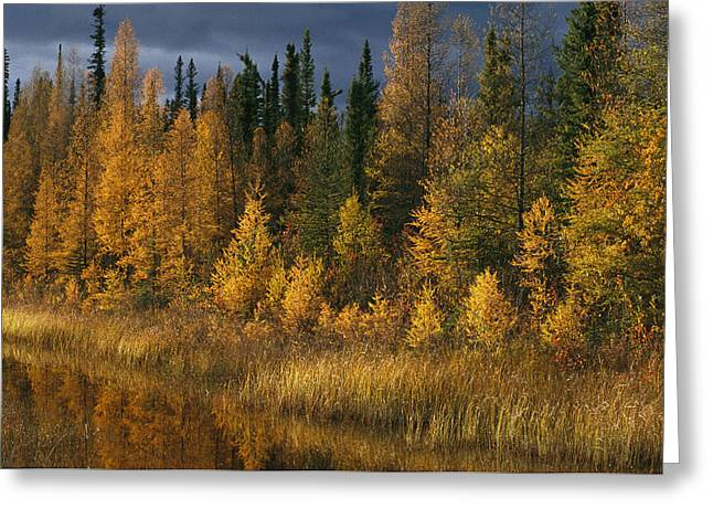 Plant Physiology Greeting Cards - Autumn Colors Are Displayed Greeting Card by Raymond Gehman