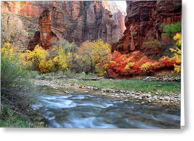 Zion National Park Greeting Cards - Autumn Colors at Sinawava temple  Greeting Card by Pierre Leclerc Photography