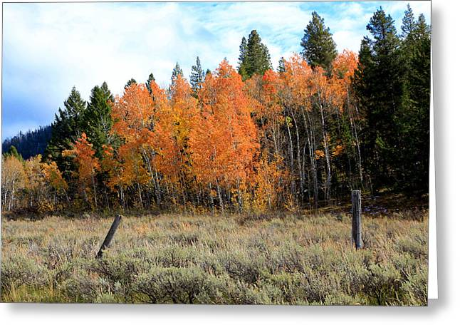 Winter Landscape With Animals Greeting Cards - Autumn Colors Greeting Card by Athena Mckinzie