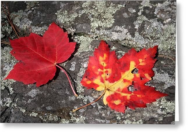 Autumn Colors Greeting Card by Kate  Leikin
