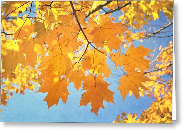 Autumn Colors Greeting Card by Kim Hojnacki