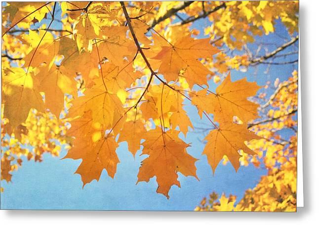 Change Of Seasons Greeting Cards - Autumn Colors Greeting Card by Kim Hojnacki