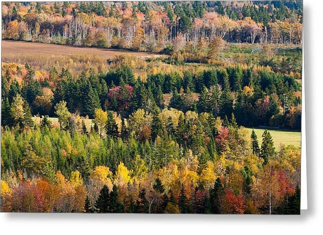 Princes Greeting Cards - Autumn Colors on the Bonshaw Hills Greeting Card by Matt Dobson