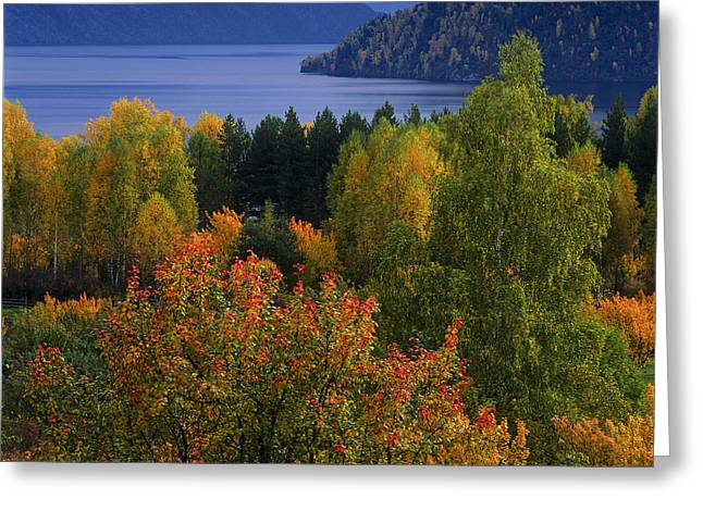 Wild Orchards Greeting Cards - Autumn colors Greeting Card by Pavel  Filatov