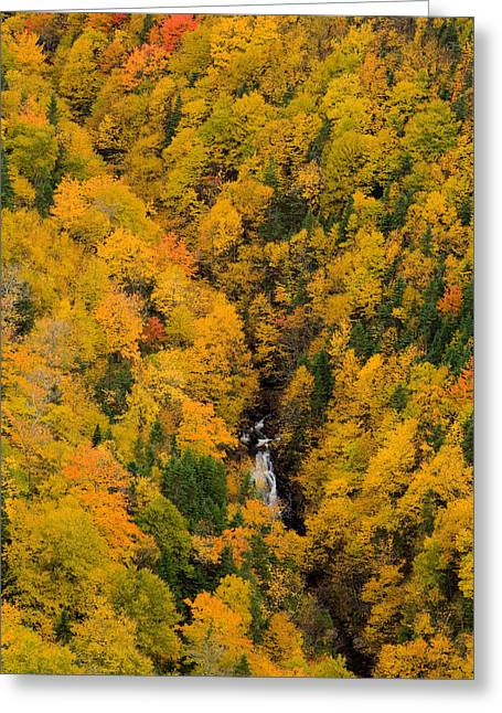 Aerial Photograph Greeting Cards - Autumn Colour And Waterfalls, Cape Greeting Card by John Sylvester