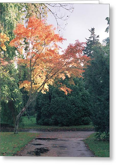 Botanical Greeting Cards - Autumn Colours Greeting Card by House Of Joseph Photography