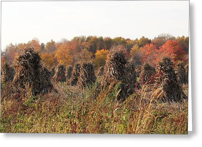 Autumn Corn Greeting Card by Donna Bosela