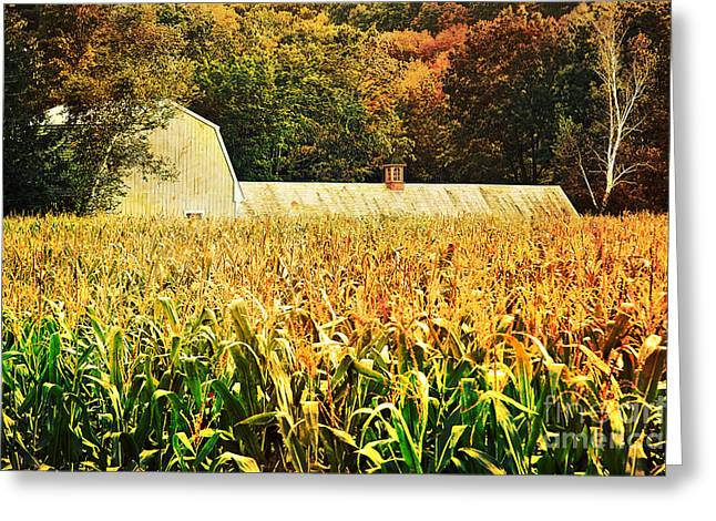 Cornfields Greeting Cards - autumn cornfield in Granville MA Greeting Card by HD Connelly