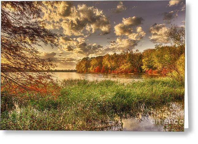 Reflections Of Sky In Water Greeting Cards - Autumn Creek Sunlight Greeting Card by Cheryl Davis