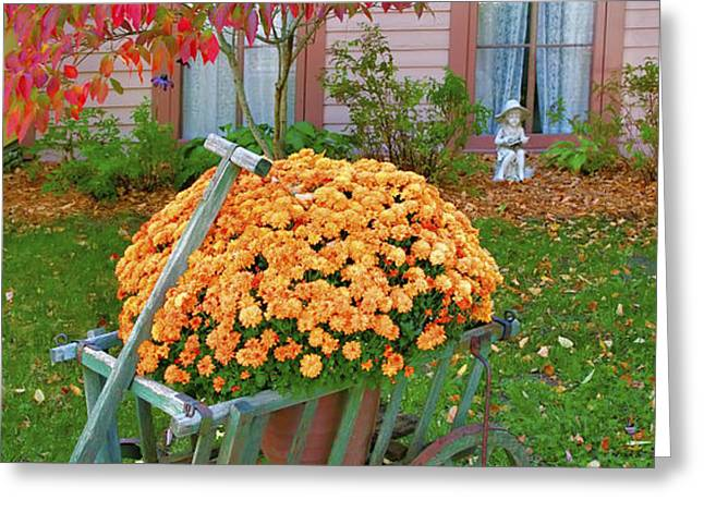 Autumn Display I Greeting Card by Steven Ainsworth