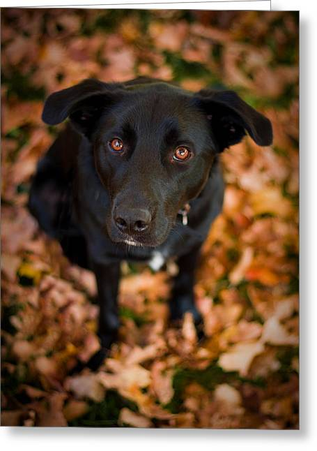 Puppy Dog Eyes Greeting Cards - Autumn Dog Greeting Card by Adam Romanowicz