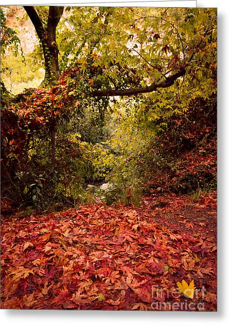 Colour Greeting Cards - Autumn Dreams Greeting Card by Nadya Ost