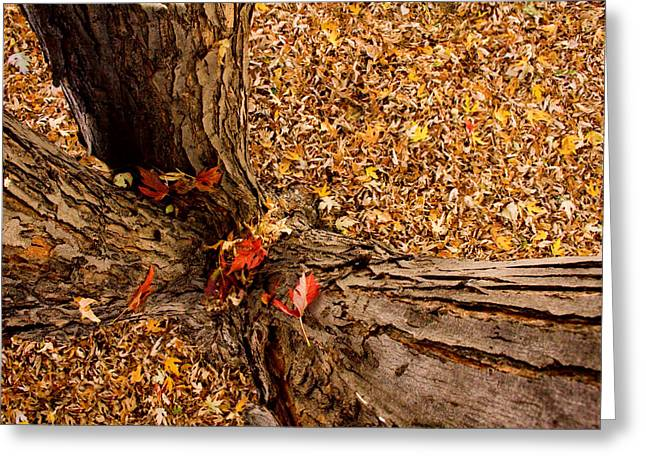 Striking Images Greeting Cards - Autumn Fall Greeting Card by James BO  Insogna